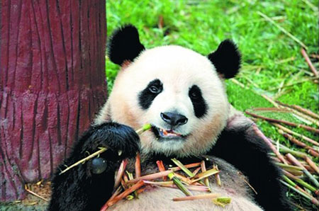 Xiamen Haicang Wild Zoo: A Natural Haven
